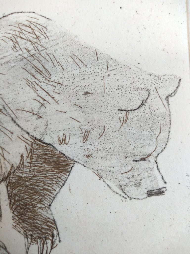 Detail of a small bear shows the bear's head and front paw printed in grey and gold ink. There is a combination of hard and soft line and a pale wash